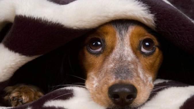 Cómo cuidar a tu mascota ante los festejos ruidosos